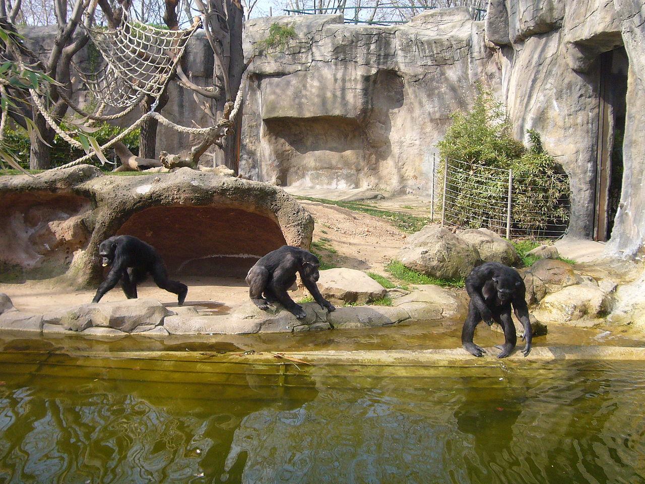 Zoo Barcelona barcelona zoo 2 for 1 or discount vouchers