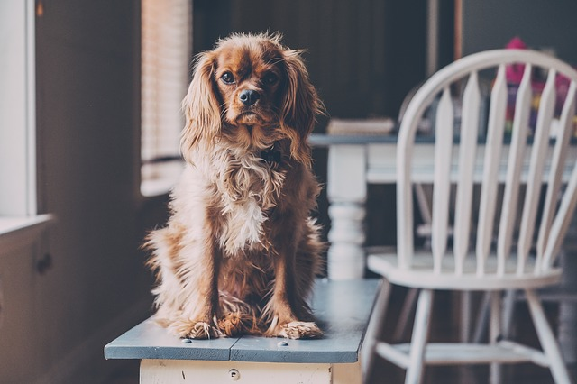 dog on bench - pet-friendly apartments
