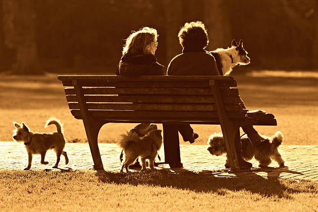 couple sitting on bench in park with dogs