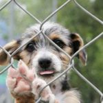Grab a Pup Save a Paw