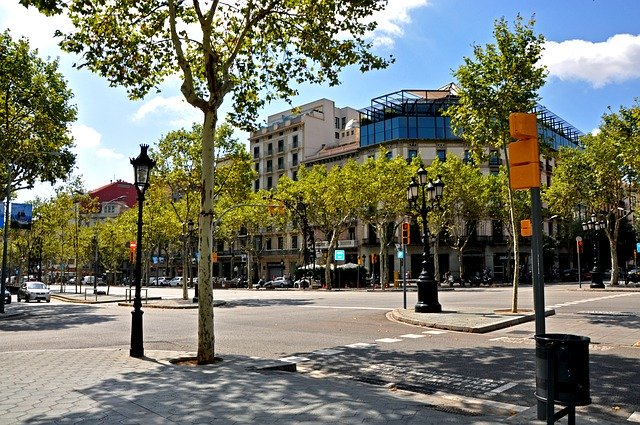 street with trees in barcelona
