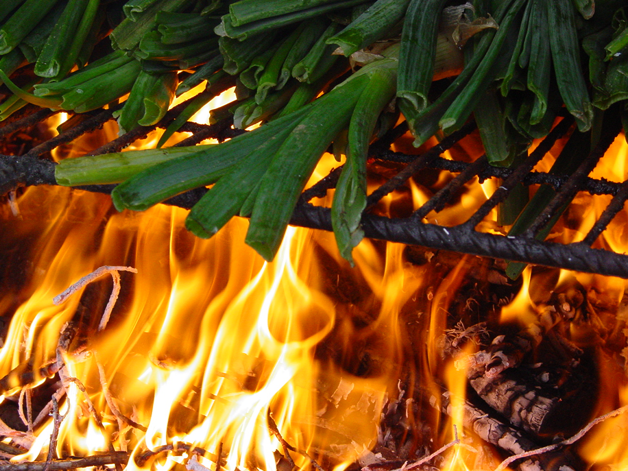 Catalan traditions: the Calçots and la Calçotada