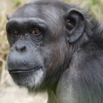 Learn about primates with Fundació MONA
