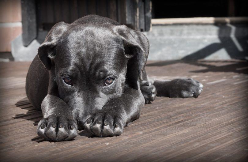 Adopt a pet, save a life