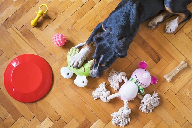 dog and his toys