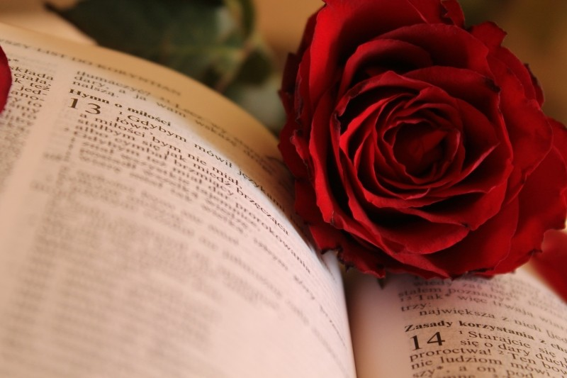 red rose in an opened book