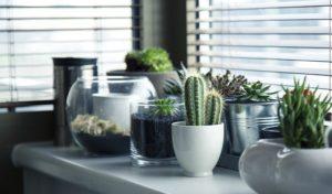 cacti-succulent-plants