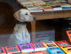 dog-with-books
