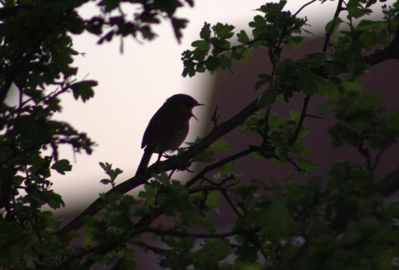 bird in tree at dawn