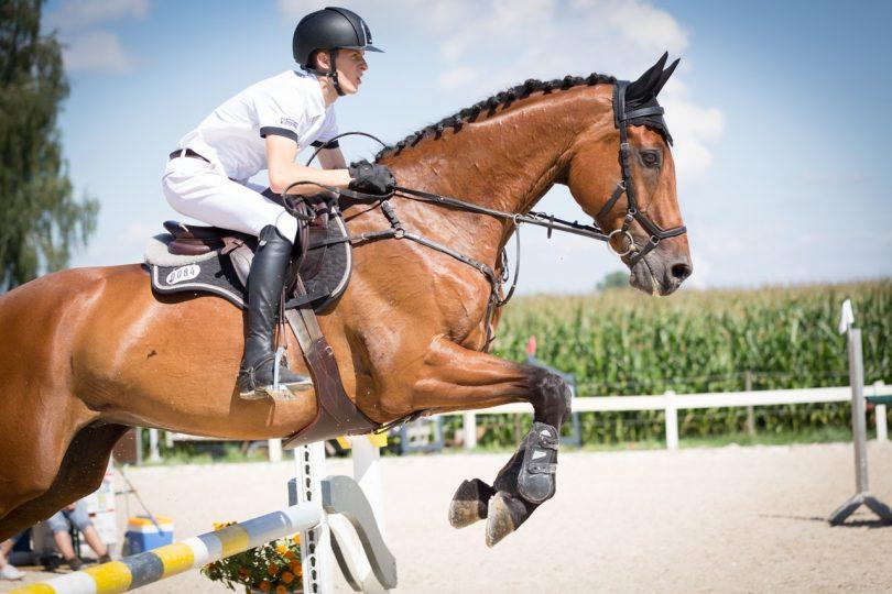 English horse riding jumping