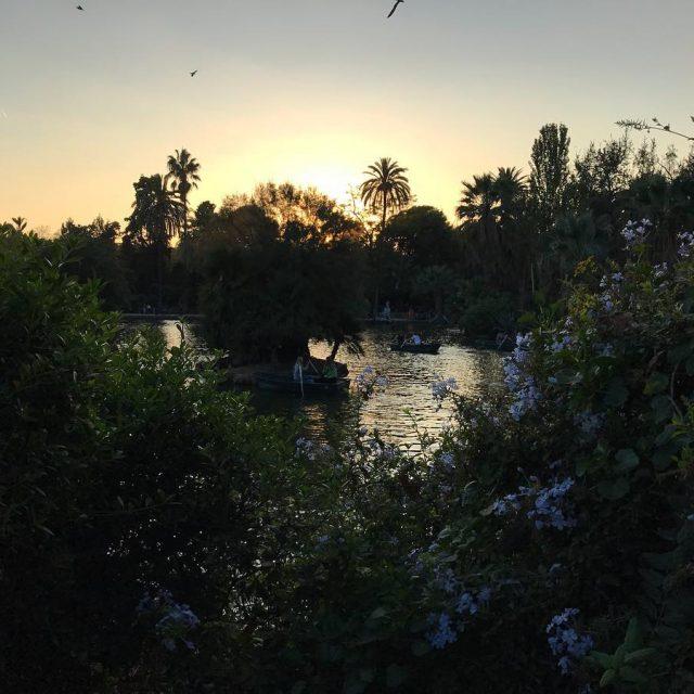 El atardecer en Barcelona atardecer barcelona ciutadella park parque naturehellip