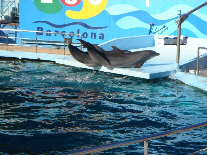 Getting A Barcelona Zoo Annual Membership