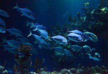 fish in aquarium barcelona