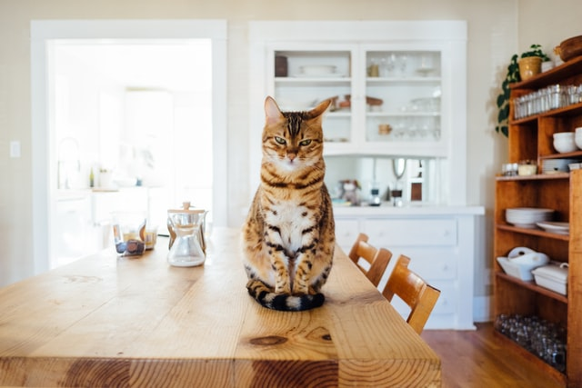 cat on table - apartment with pet