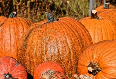 a few pumpkins