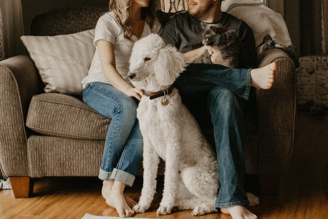 douple on couch with dog and cat