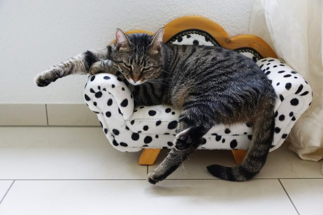 cat on special cat bed