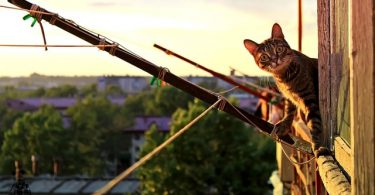 cat looking from terrace