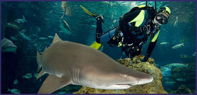 Visiting l 39 aqu rium of barcelona shbarcelona for Aquarium de barcelona